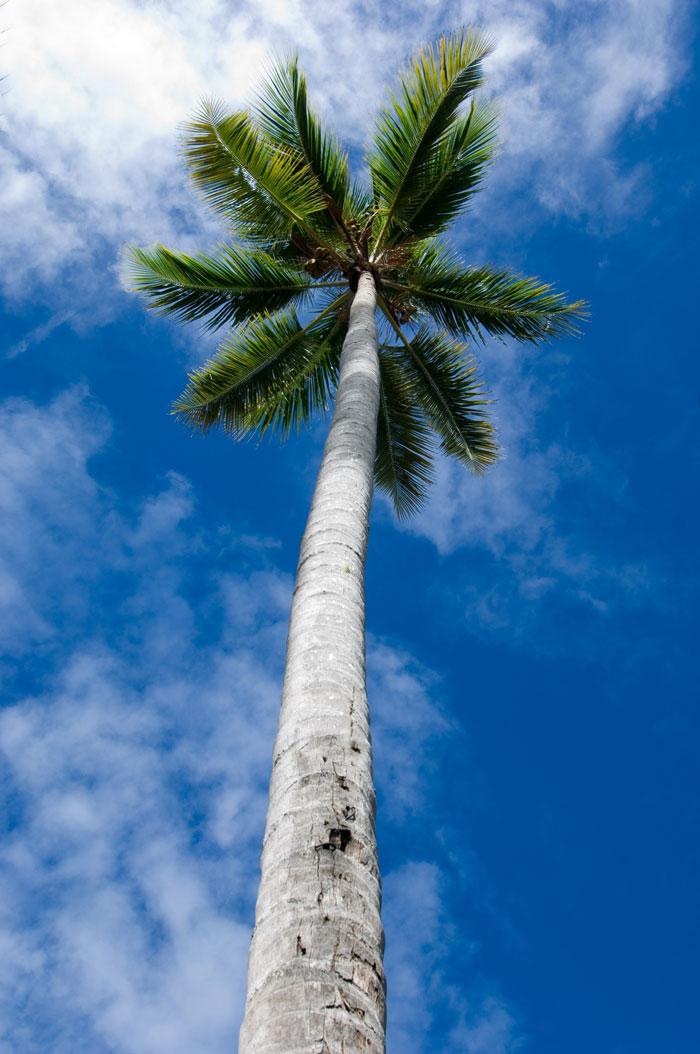 palmtreebluesky