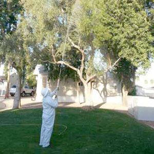 Tree-Spraying_300x300_01